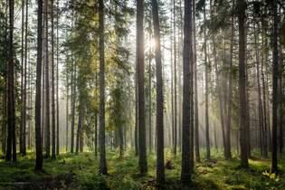 Forest-friendly - Elopak