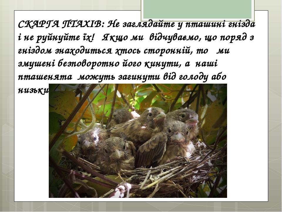 СКАРГА ПТАХІВ: Не заглядайте у пташині гнізда і не руйнуйте їх! Якщо ми відчуваємо, що поряд з гніздом знаходиться хтось сторонній, то ми змушені б...