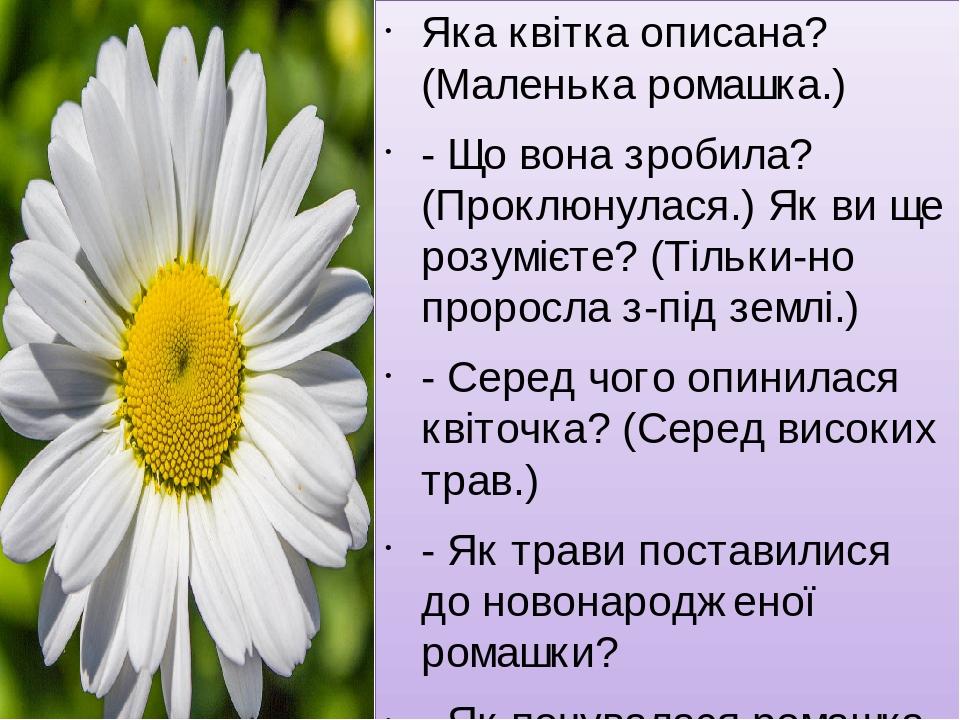 Яка квітка описана? (Маленька ромашка.) - Що вона зробила? (Проклюнулася.) Як ви ще розумієте? (Тільки-но проросла з-під землі.) - Серед чого опини...