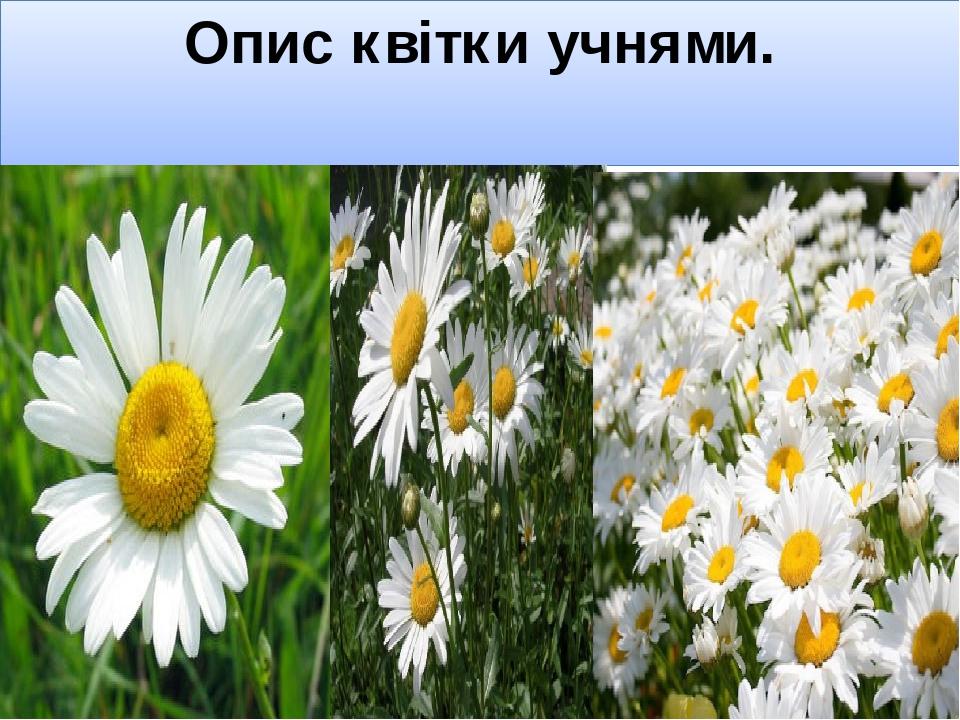 Опис квітки учнями.