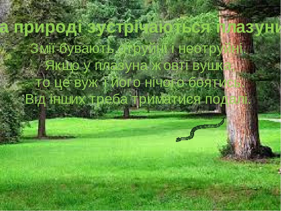 На природі зустрічаються плазуни Змії бувають отруйні і неотруйні. Якщо у плазуна жовті вушка, то це вуж і його нічого боятись. Від інших треба три...