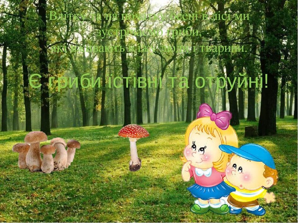 Влітку та на початку осені в лісі ми зустрічаємо гриби, які вживають в їжу люди і тварини. Є гриби їстівні та отруйні!