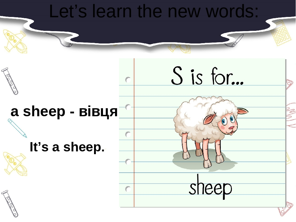 Let's learn the new words: a sheep - вівця It's a sheep.