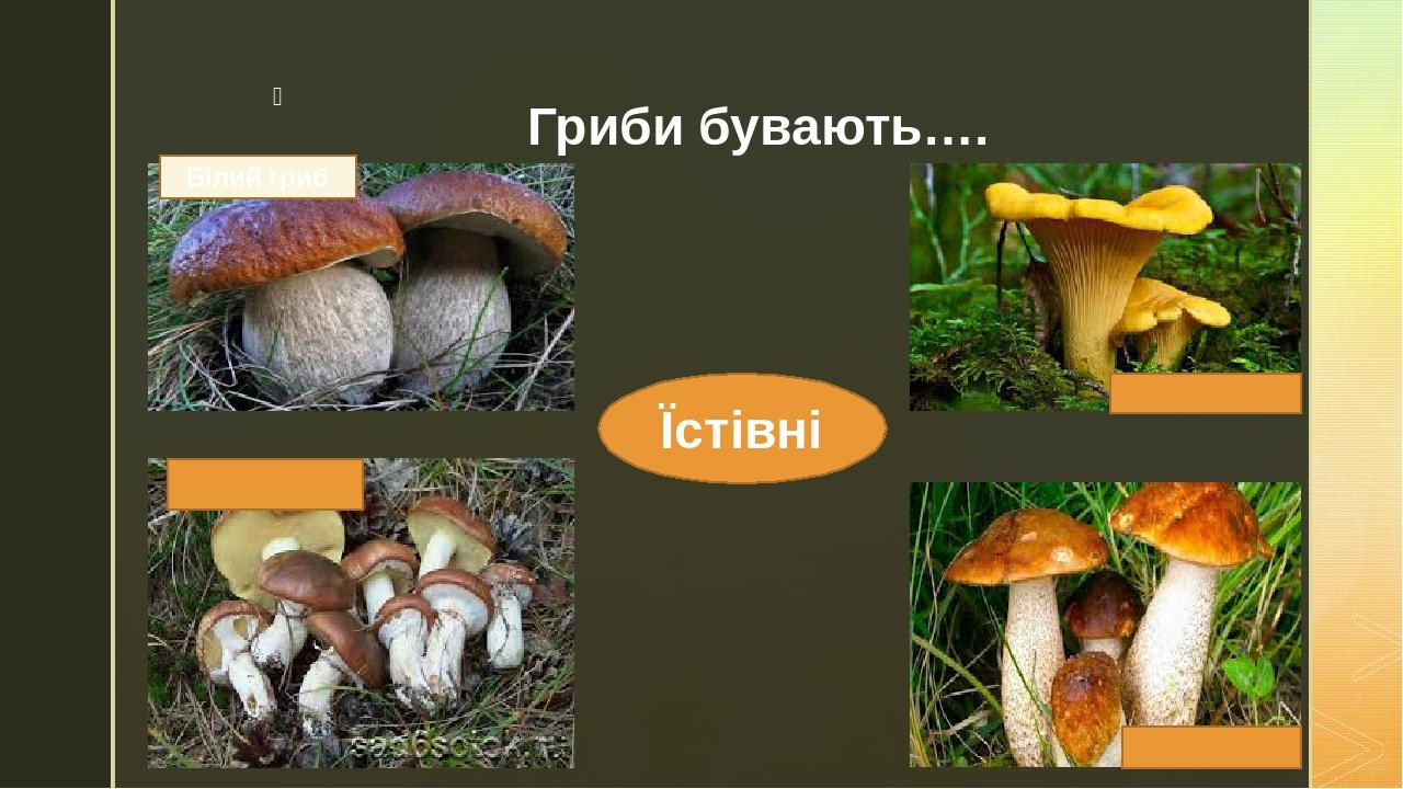 Гриби бувають…. Їстівні Білий гриб z