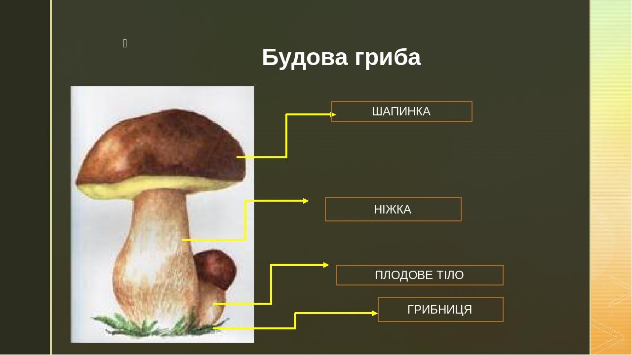 Будова гриба ШАПИНКА НІЖКА ПЛОДОВЕ ТІЛО ГРИБНИЦЯ z