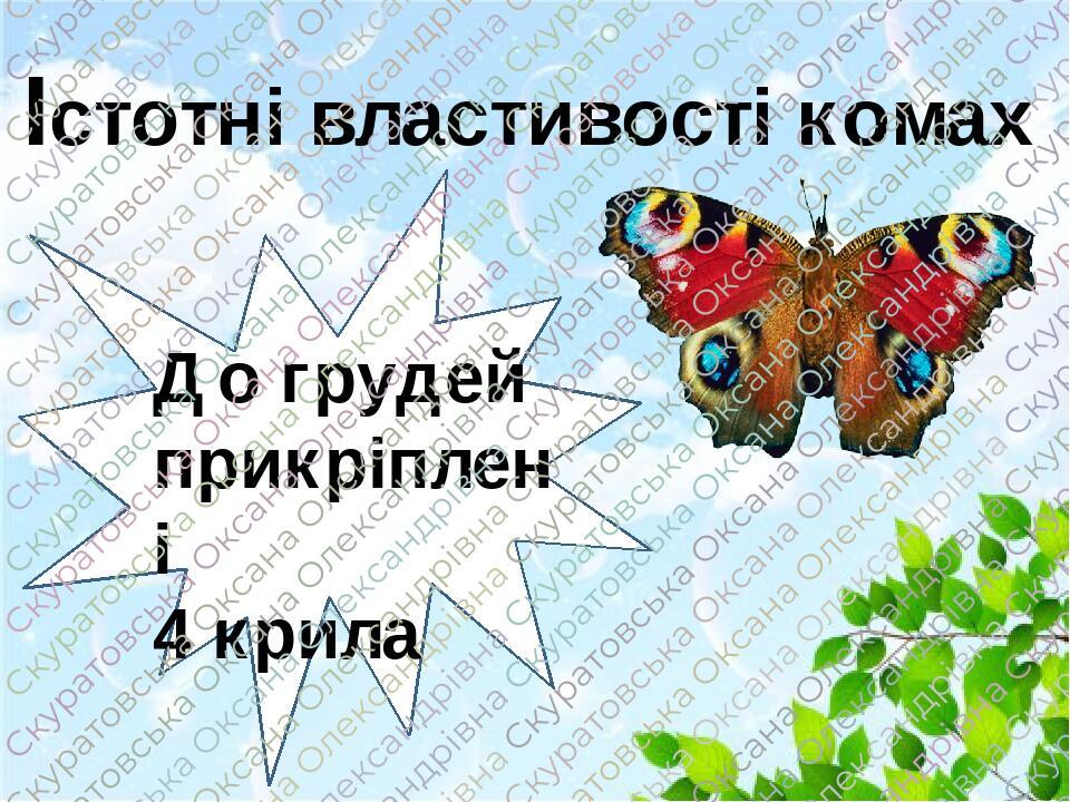 Істотні властивості комах ттт До грудей прикріплені 4 крила