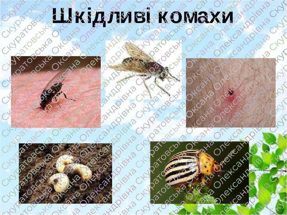 Шкідливі комахи