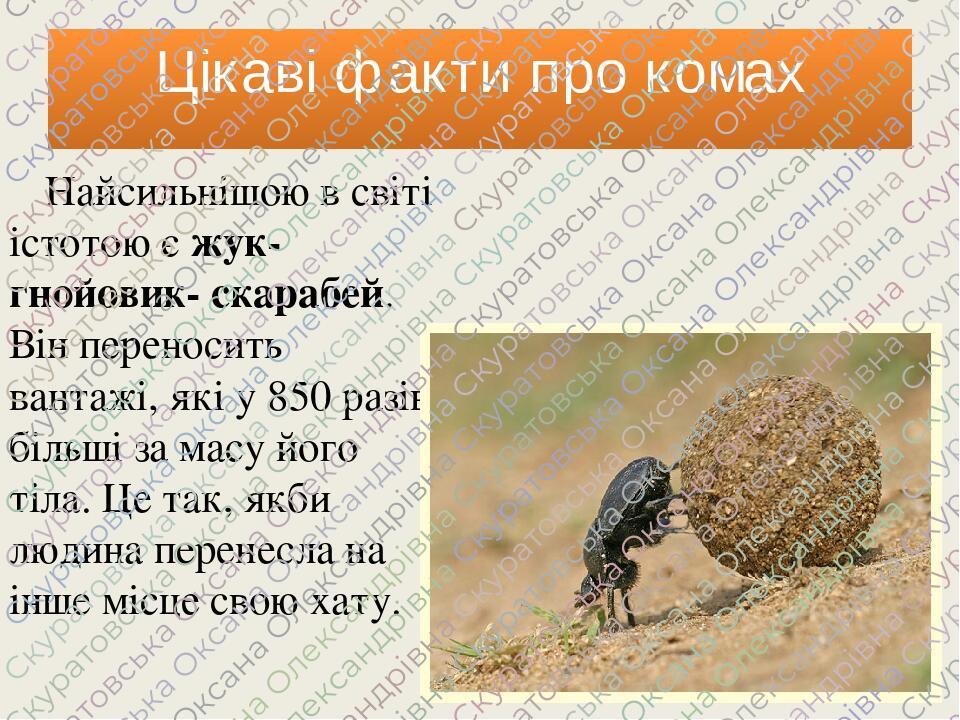 Цікаві факти про комах Найсильнішою в світі істотою є жук-гнойовик- скарабей. Він переносить вантажі, які у 850 разів більші за масу його тіла. Це ...