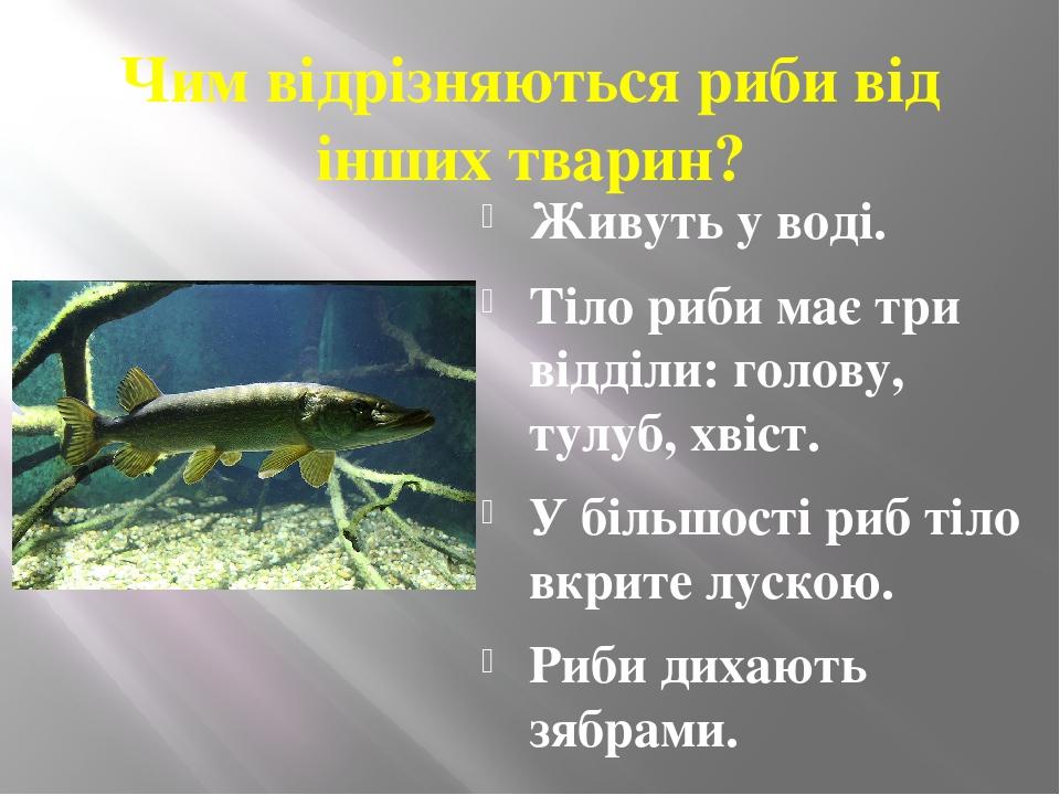 Чим відрізняються риби від інших тварин? Живуть у воді. Тіло риби має три відділи: голову, тулуб, хвіст. У більшості риб тіло вкрите лускою. Риби д...