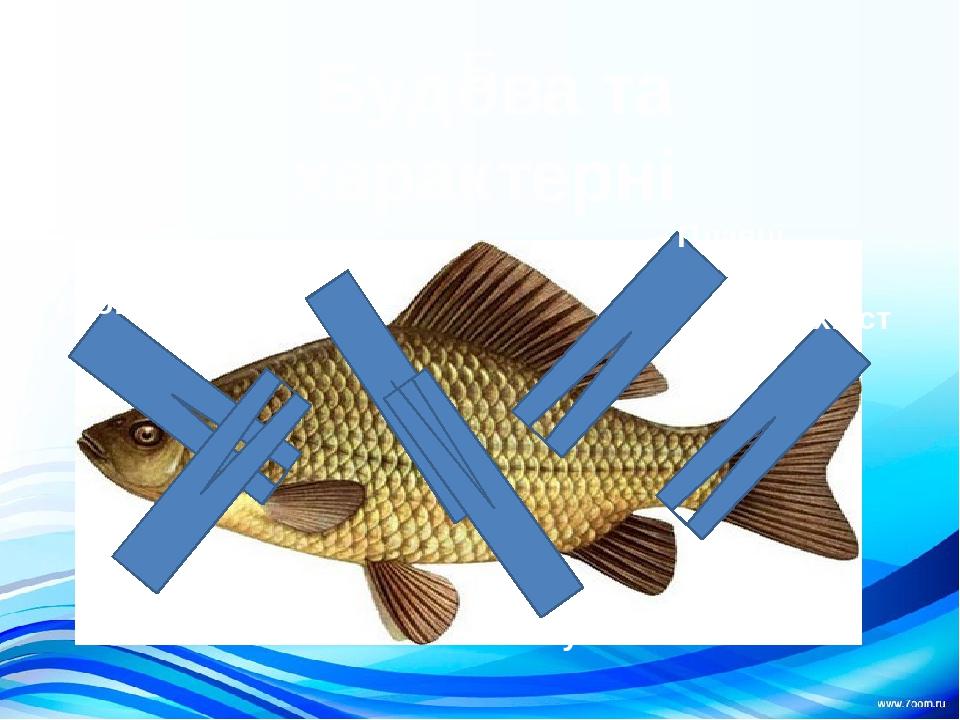 Б Будова та характерні ознаки риби Го Тулуб Голова хвіст луска зябра Плавці