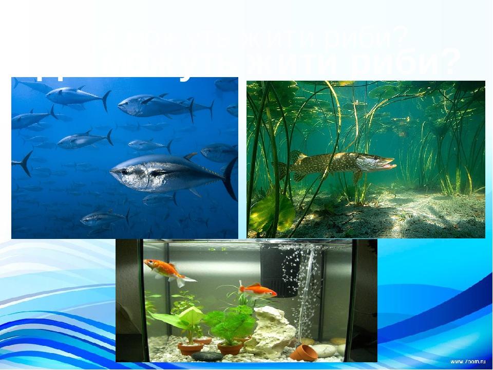 Де можуть жити риби? Де можуть жити риби?
