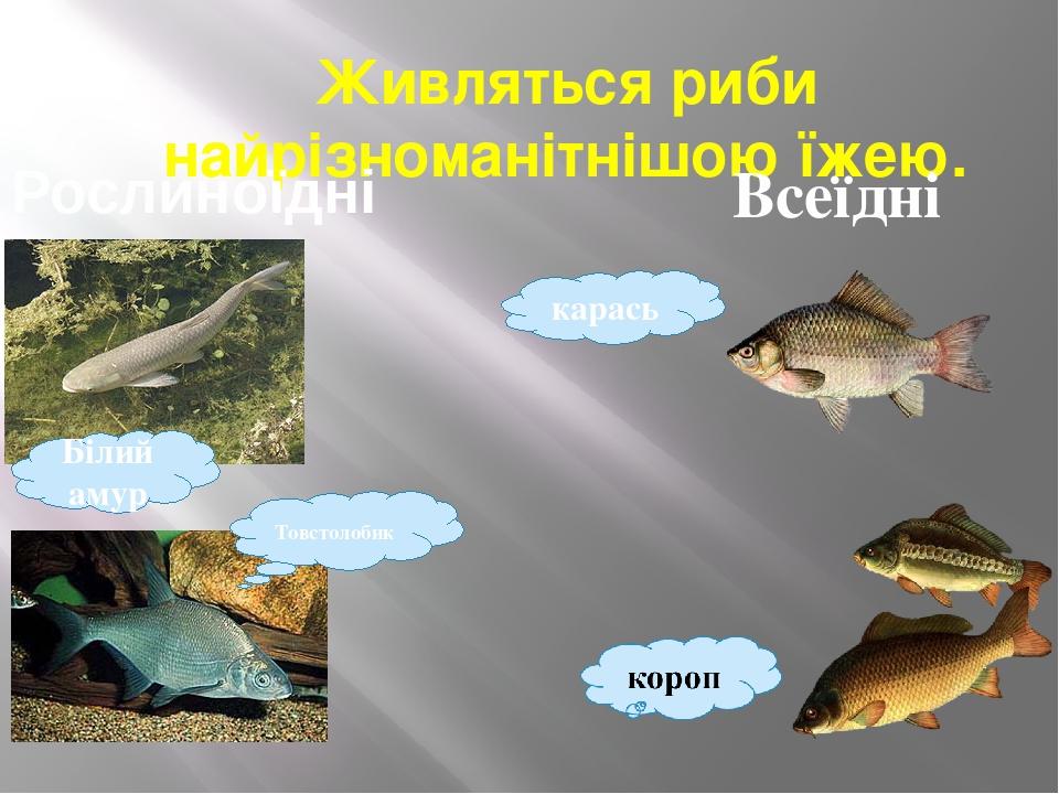 Живляться риби найрізноманітнішою їжею. Білий амур Товстолобик Рослиноїдні Всеїдні карась