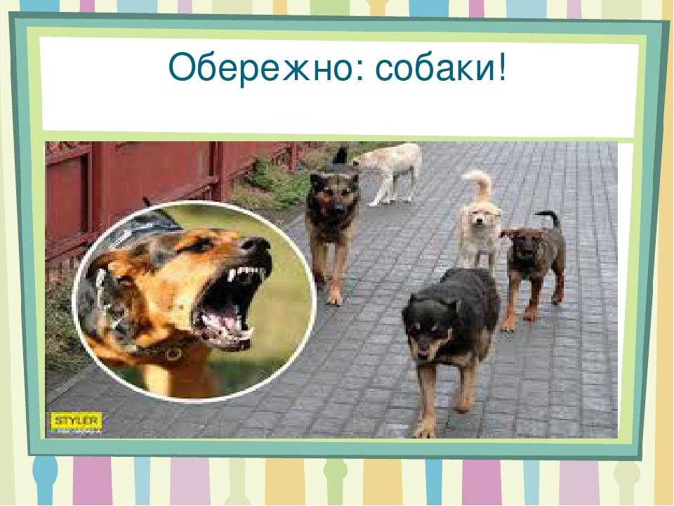 Обережно: собаки!
