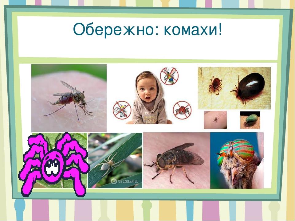 Обережно: комахи!