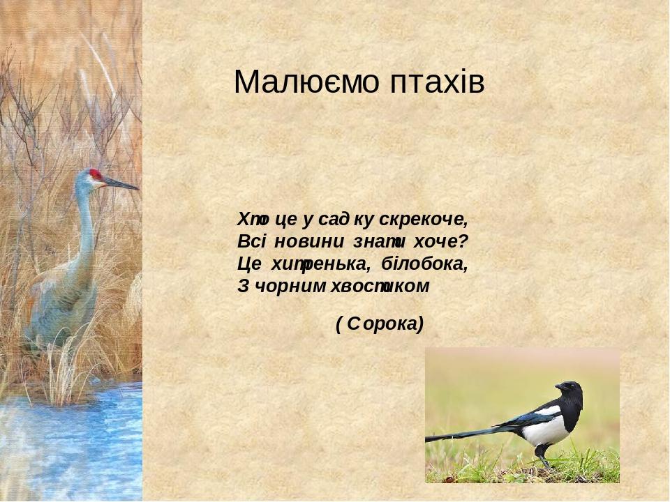 Малюємо птахів Хто це у садку скрекоче, Всі новини знати хоче? Це хитренька, білобока, З чорним хвостиком ( Сорока)