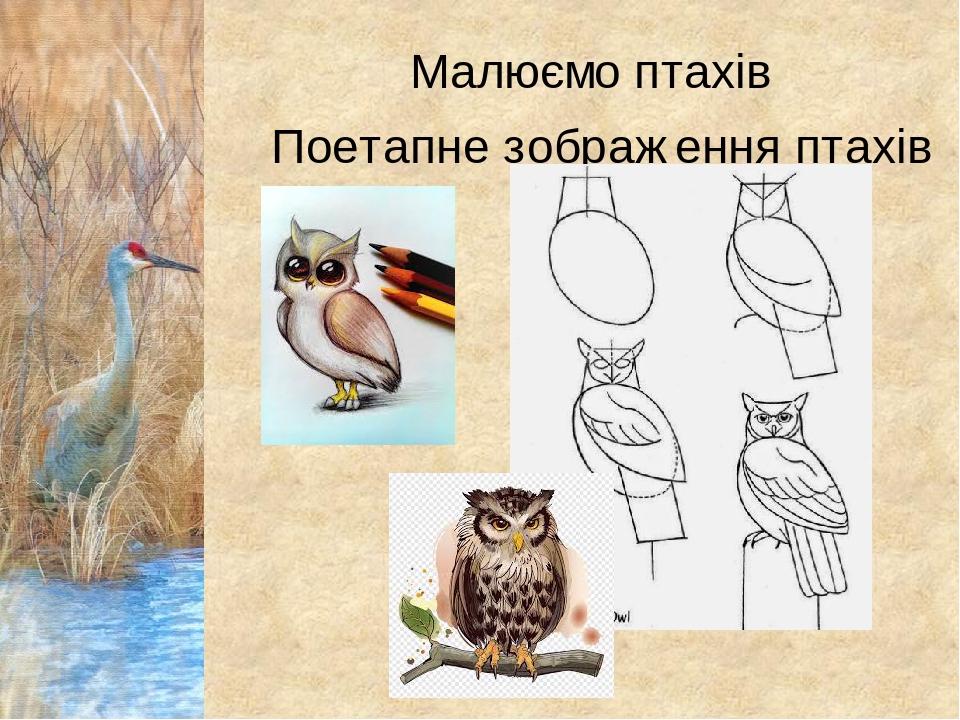Малюємо птахів Поетапне зображення птахів