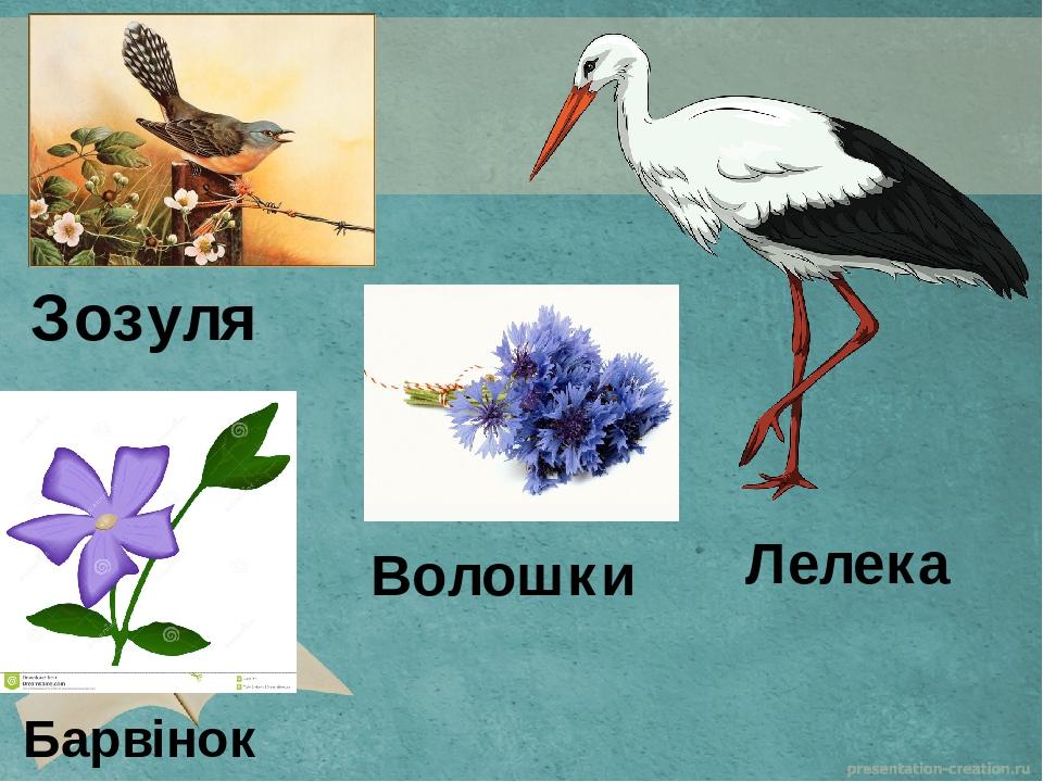 Зозуля Лелека Волошки Барвінок