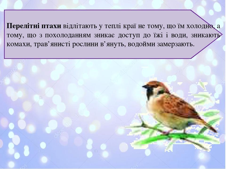 Чому птахи змущені перелітати? Перелітні птахивідлітають у теплі краї не тому, що їм холодно, а тому, що з похолоданням зникає доступ до їжі і вод...