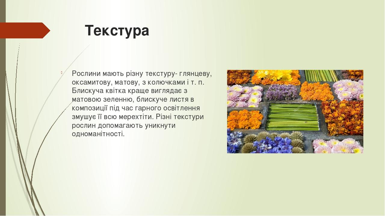 Текстура  Рослини мають різну текстуру- глянцеву, оксамитову, матову, з колючками і т. п. Блискуча квітка краще виглядає з матовою зеленню, блиску...