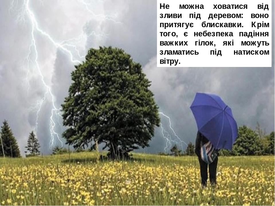Не можна ховатися від зливи під деревом: воно притягує блискавки. Крім того, є небезпека падіння важких гілок, які можуть зламатись під натиском ві...