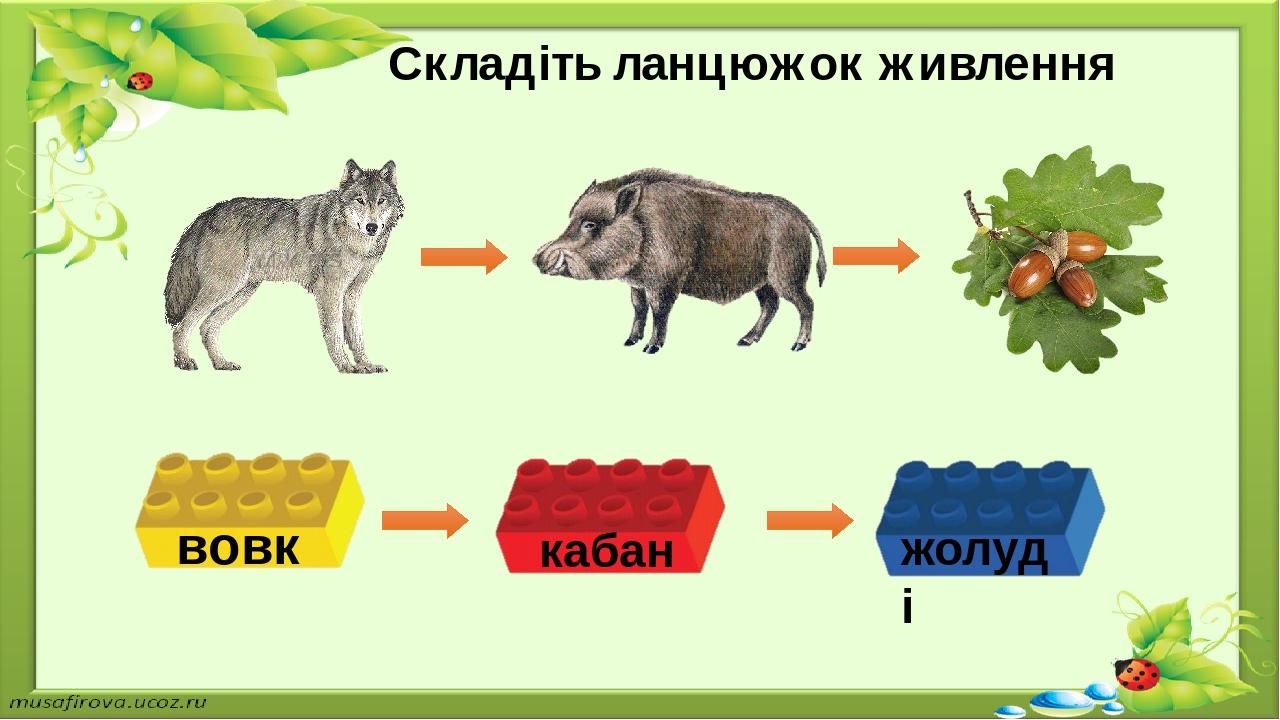 Складіть ланцюжок живлення вовк жолуді кабан