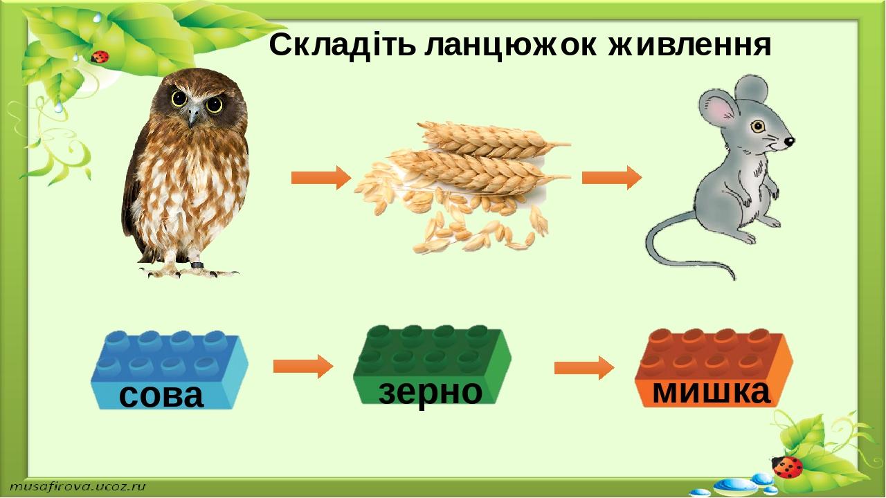 Складіть ланцюжок живлення сова зерно мишка