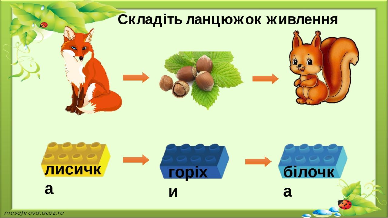 Складіть ланцюжок живлення лисичка горіхи білочка