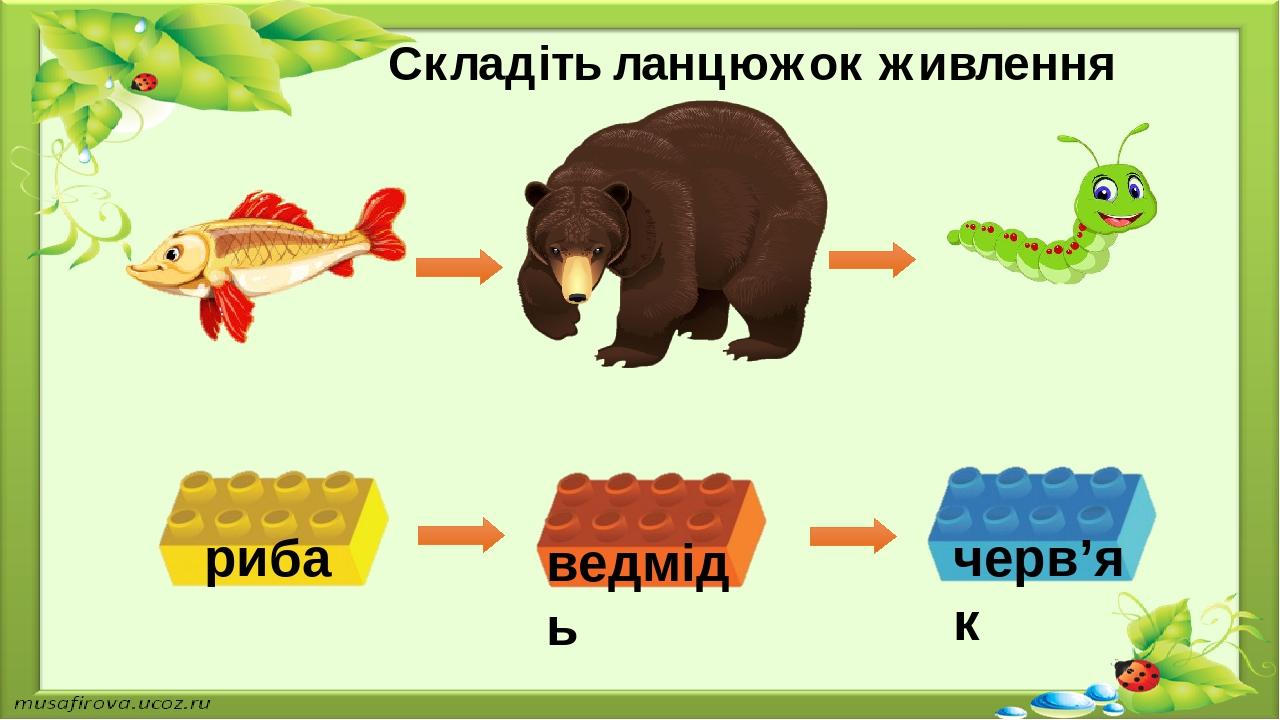Складіть ланцюжок живлення риба ведмідь черв'як