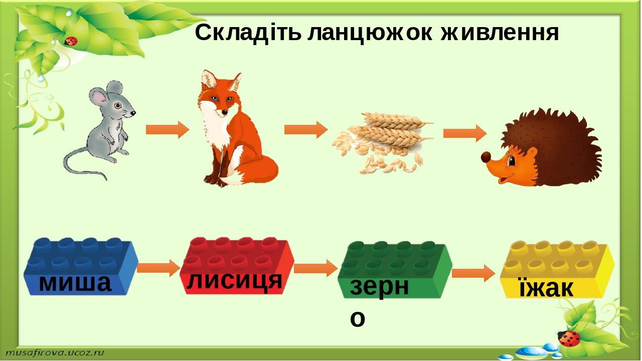 Складіть ланцюжок живлення миша лисиця зерно їжак