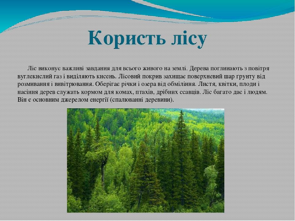 Користь лісу Ліс виконує важливі завдання для всього живого на землі. Дерева поглинають з повітря вуглекислий газ і виділяють кисень. Лісовий покри...