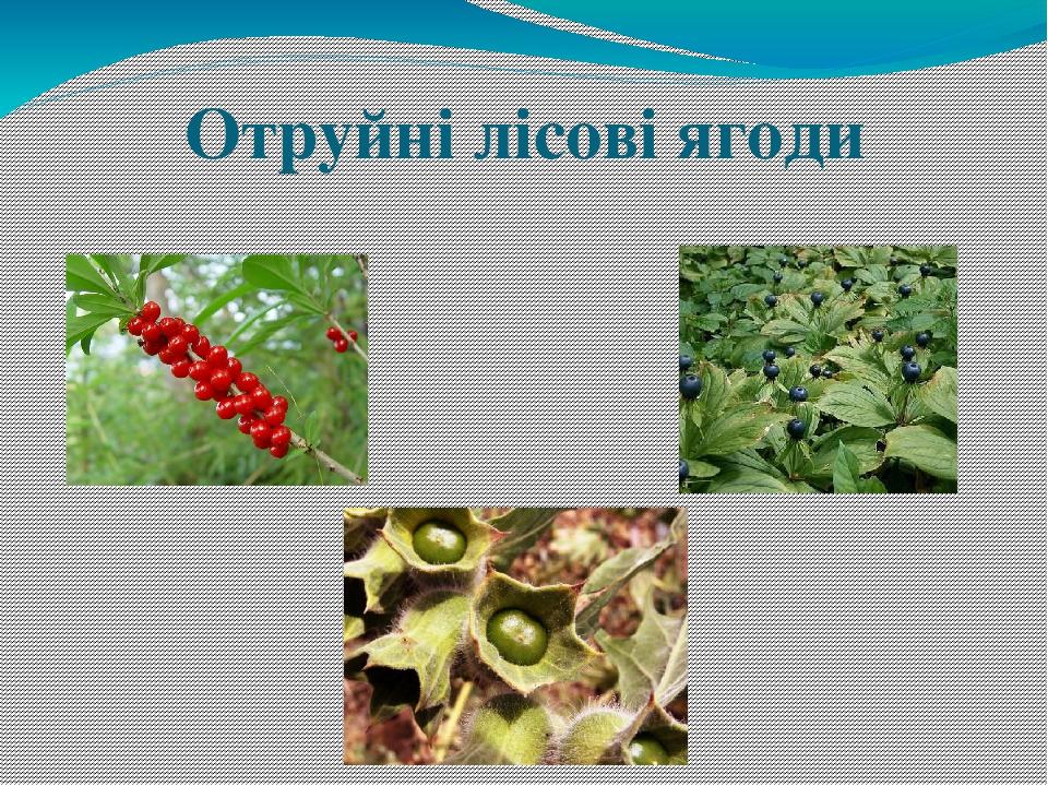 Отруйні лісові ягоди
