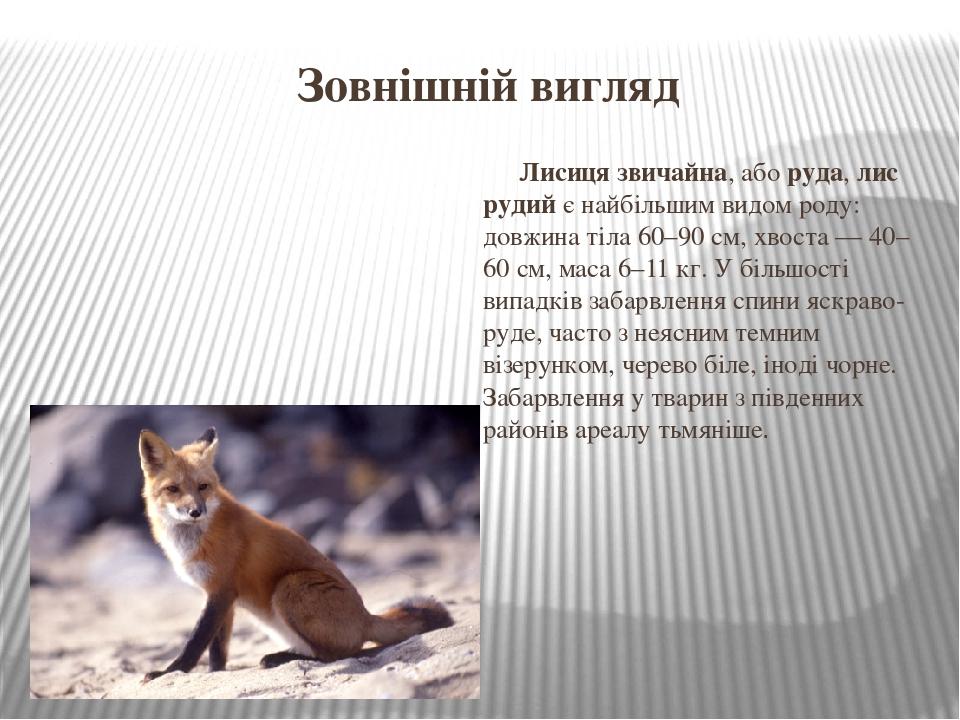 Зовнішній вигляд Лисиця звичайна, аборуда,лис рудийє найбільшим видом роду: довжина тіла 60–90см, хвоста— 40–60см, маса 6–11кг. У більшості ...