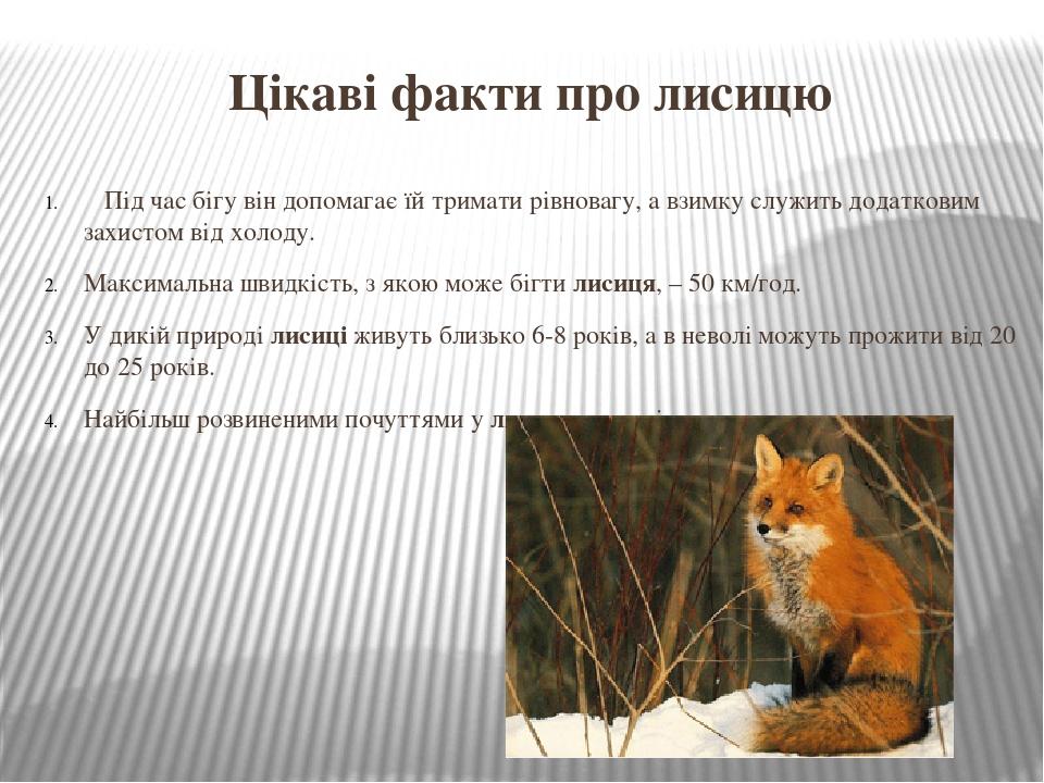 Цікаві факти про лисицю Під час бігу він допомагає їй тримати рівновагу, а взимку служить додатковим захистом від холоду. Максимальна швидкість, з ...