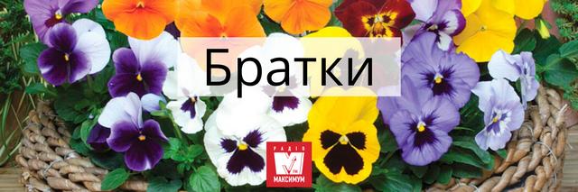 Говори красиво: 10 українських назв квітів, які милують око - фото 400901