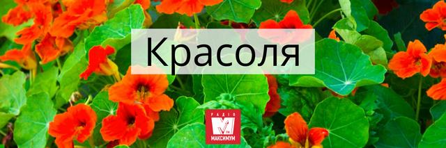 Говори красиво: 10 українських назв квітів, які милують око - фото 400903