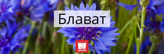 Говори красиво: 10 українських назв квітів, які милують око - фото 400905