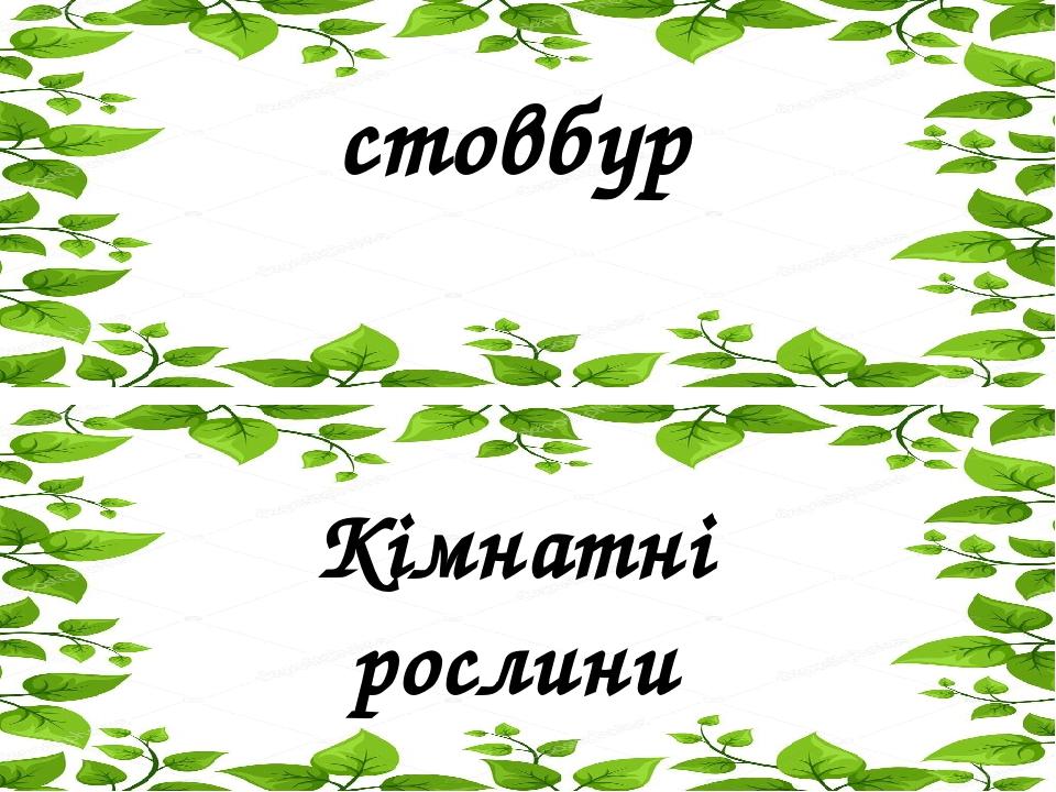 стовбур Кімнатні рослини