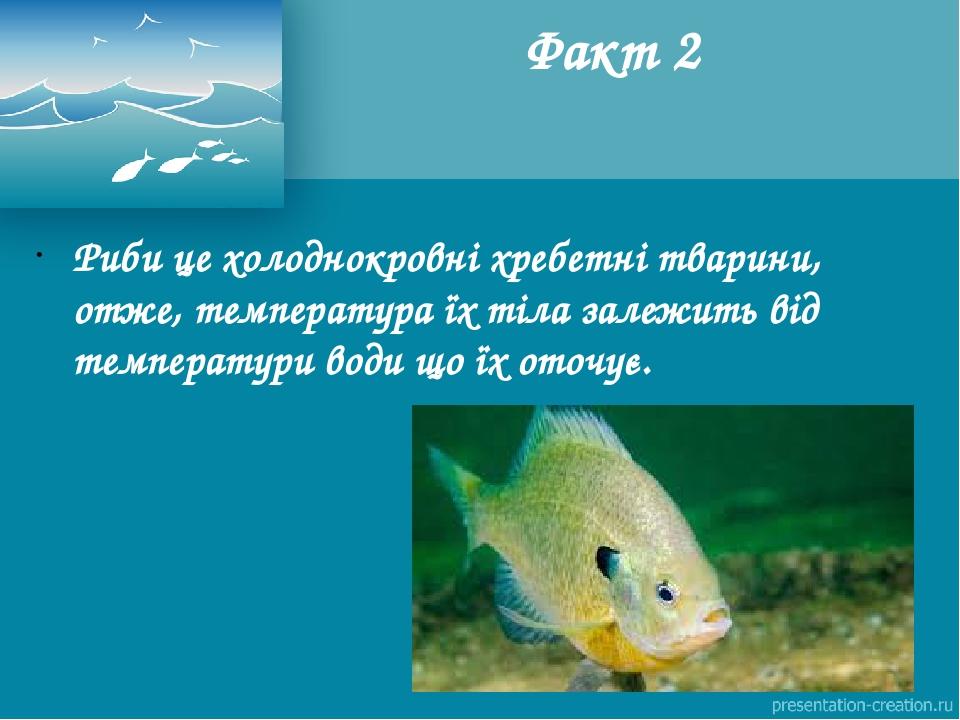 Риби це холоднокровні хребетнітварини, отже, температура їх тіла залежить від температури води що їх оточує. Факт 2