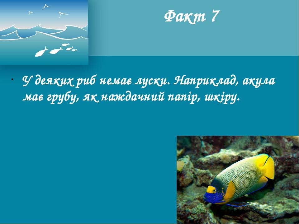 У деяких риб немає луски. Наприклад, акула має грубу, як наждачний папір, шкіру. Факт 7