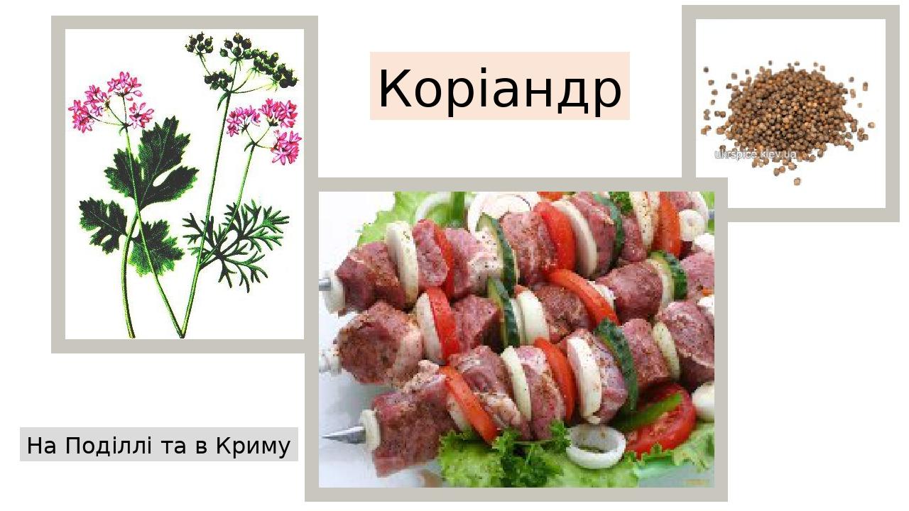 Коріандр На Поділлі та в Криму