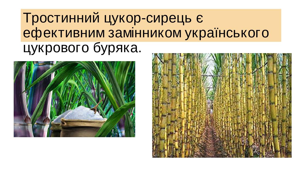 Тростинний цукор-сирець є ефективним замінником українського цукрового буряка.