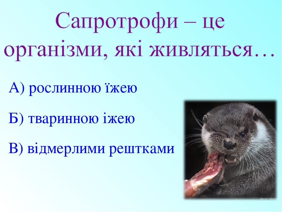 А) рослинною їжею Б) тваринною іжею В) відмерлими рештками
