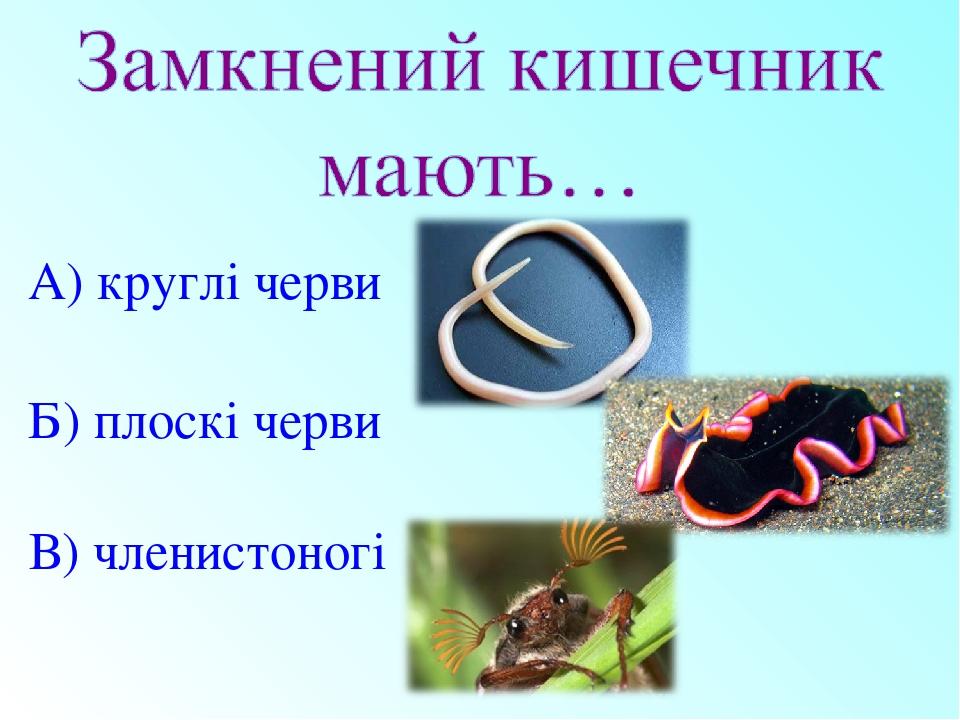 Б) плоскі черви А) круглі черви В) членистоногі