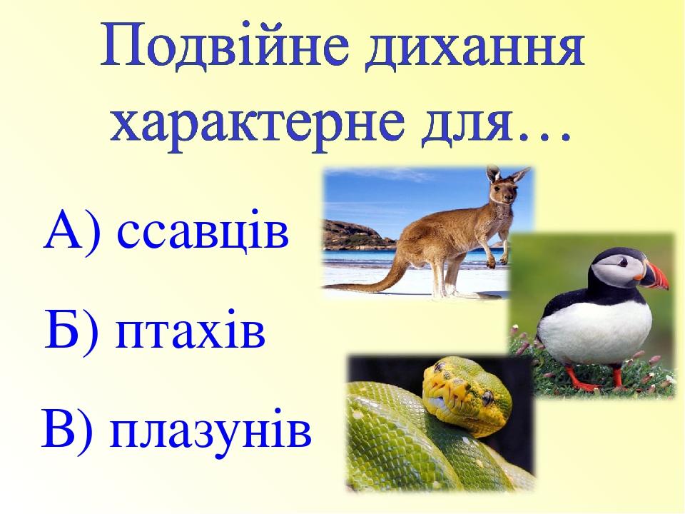 А) ссавців Б) птахів В) плазунів