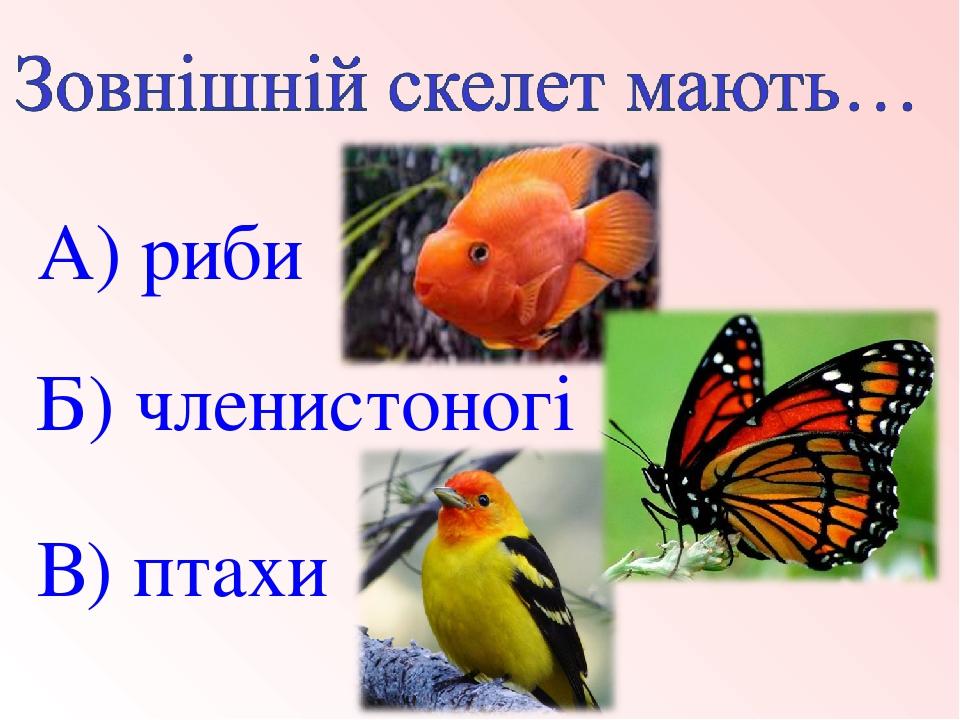 В) птахи Б) членистоногі А) риби