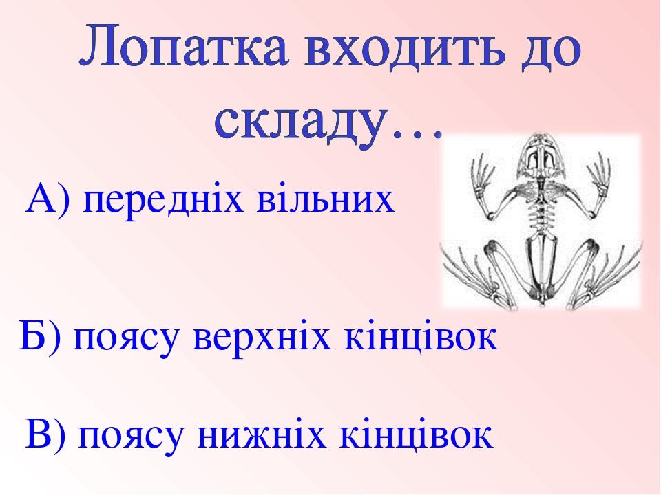 В) поясу нижніх кінцівок Б) поясу верхніх кінцівок А) передніх вільних кінцівок