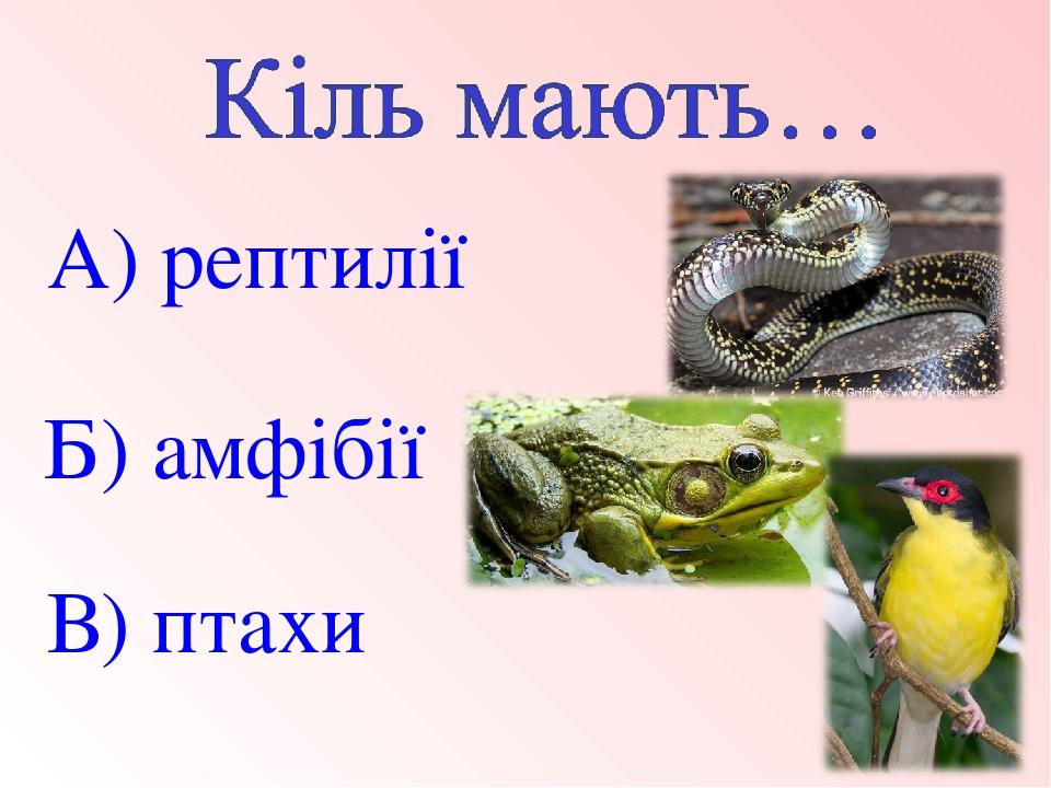 В) птахи Б) амфібії А) рептилії