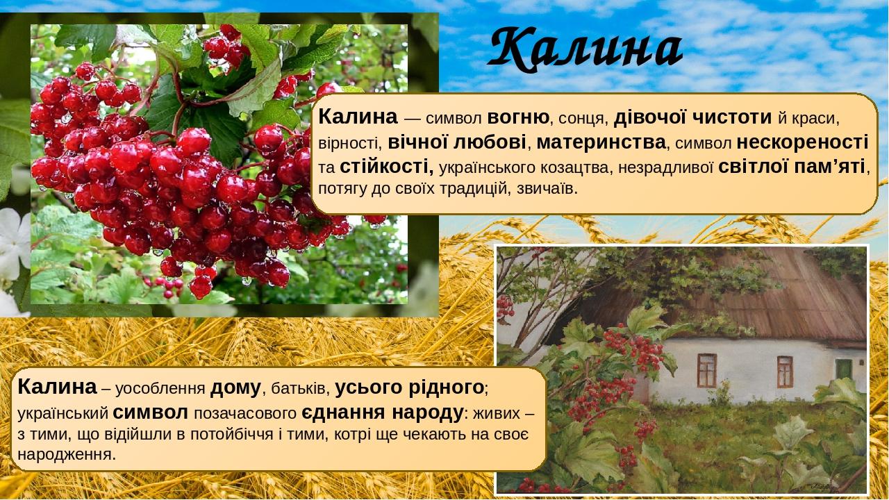 Калина — символ вогню, сонця, дівочої чистоти й краси, вірності, вічної любові, материнства, символ нескореності та стійкості, українського козацтв...