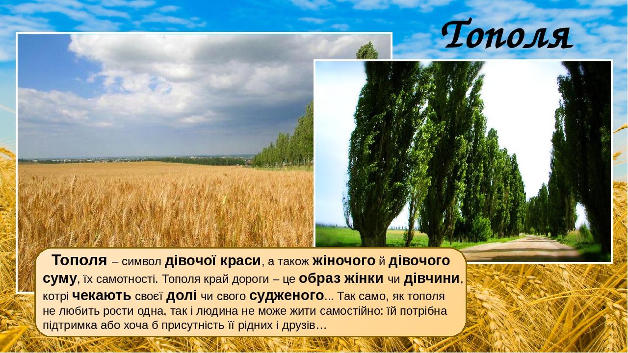 Тополя Тополя – символ дівочої краси, а також жіночого й дівочого суму, їх самотності. Тополя край дороги – це образ жінки чи дівчини, котрі чекают...