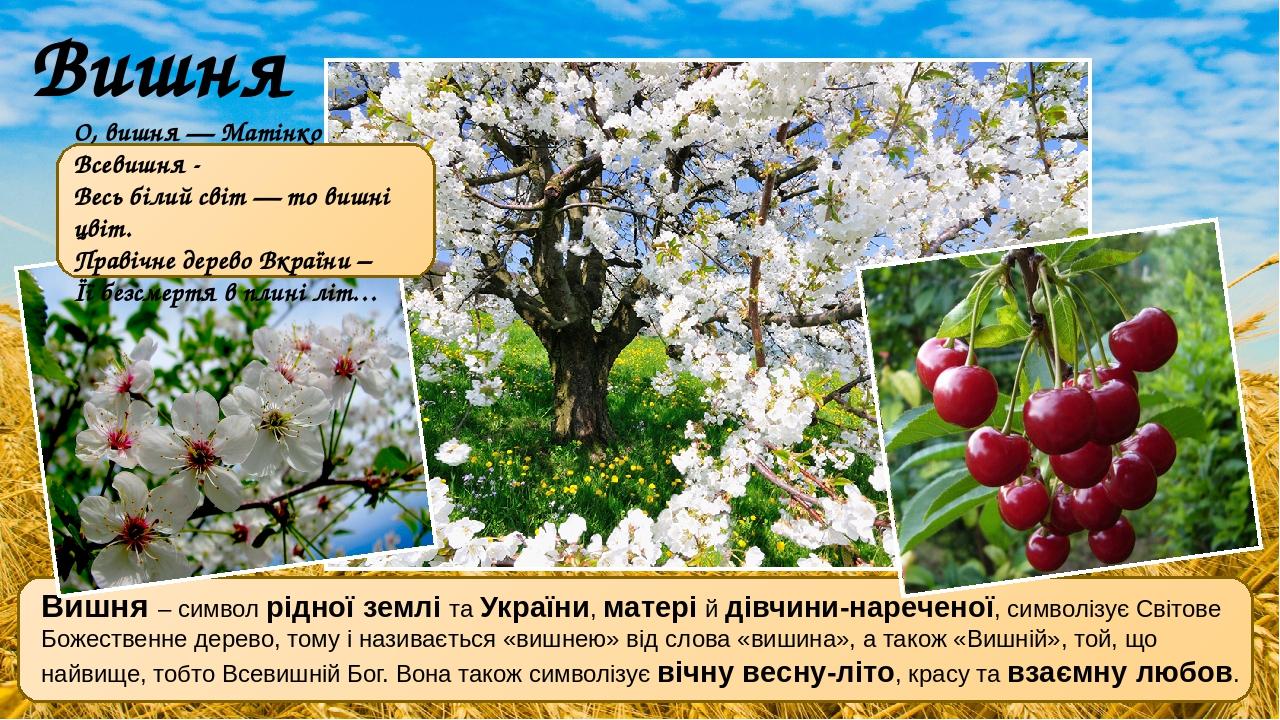 Вишня – символ рідної землі та України, матері й дівчини-нареченої, символізує Світове Божественне дерево, тому і називається «вишнею» від слова «в...